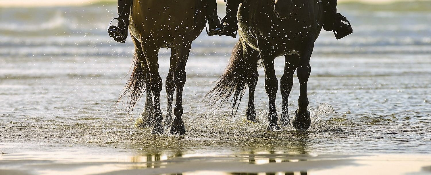 two horses trotting through water